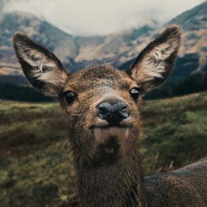 Lovely Animals - Animal GIFs